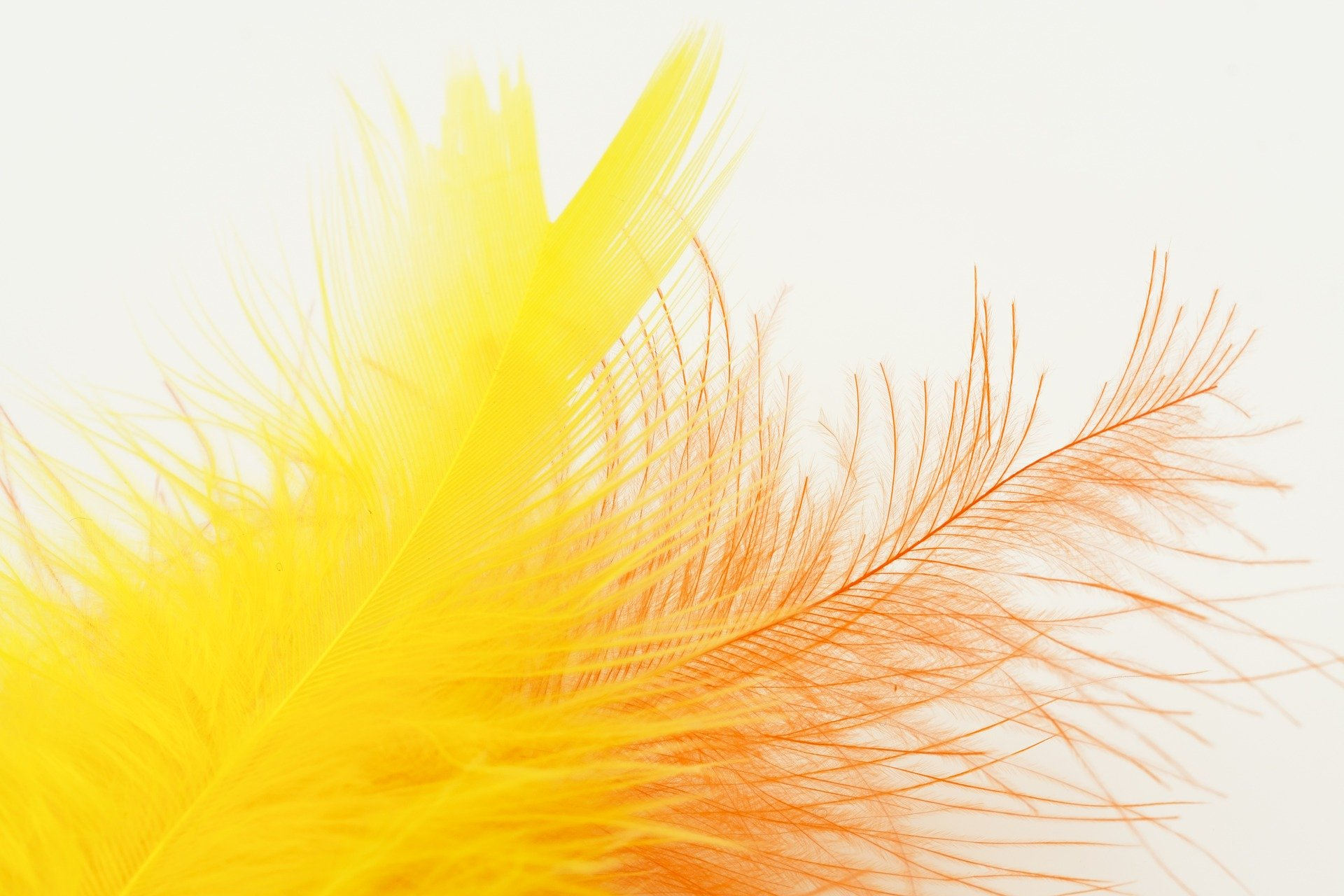 feather-3158328_1920